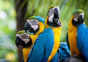 Лечение паразитарных и инфекционных заболеваний птиц