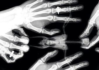 Рентгенография для животных