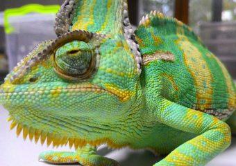 Диагностика и все виды анализов рептилий